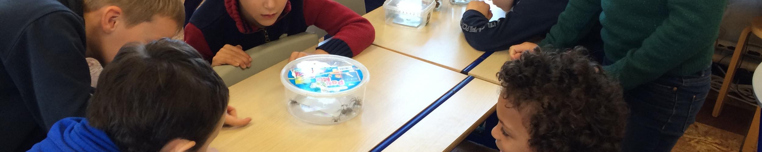 Spinnen in de klas!